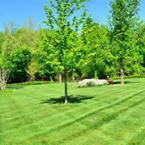 Green Bay Lawn Mowing and Landscaping Services